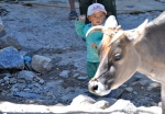 Go Away - a little rosy cheeked ladakhi boy shoos the cow