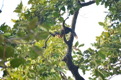 The Giant Indian squirrel makes her first appearance to us